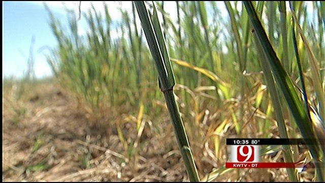 Extreme Drought Devastating To Oklahoma Crops