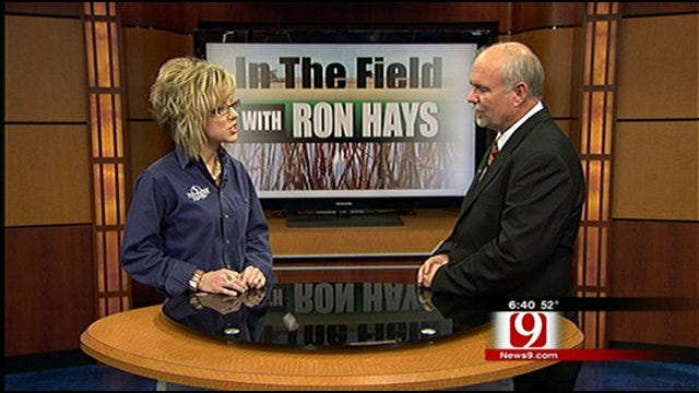 In The Field: Oklahoma Youth Expo Underway
