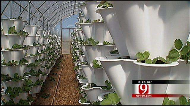 Urban Harvest Program Feeds Hungry Oklahomans, Teaches Gardening Tips