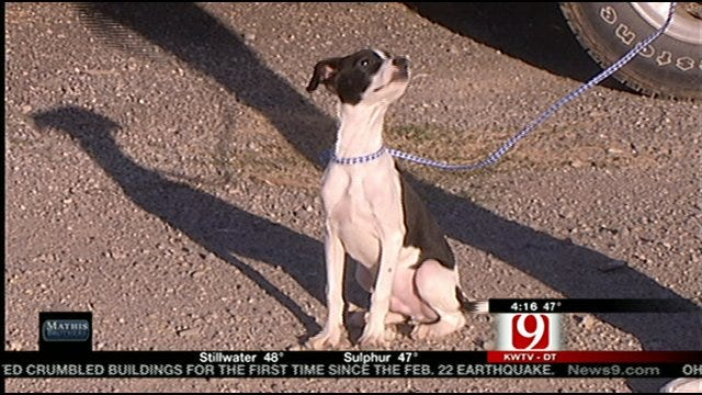Pup Gets New 'Leash' On Life After Surviving Euthanasia