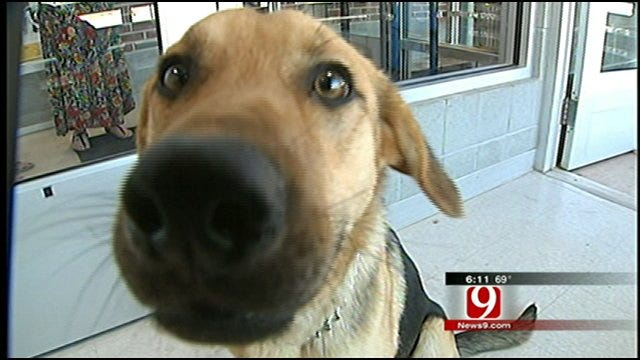 Dog Abandoned In Snow Storm Needs New Home
