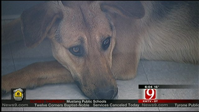 Police Search For Owner Who Abandoned Dog At Edmond Animal Shelter