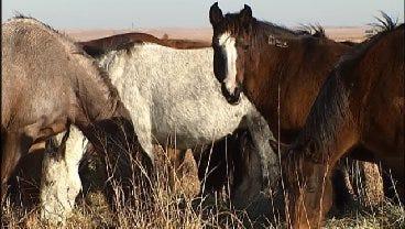 Sen. Coburn: 'We're Throwing Money Away' Housing Wild Horses