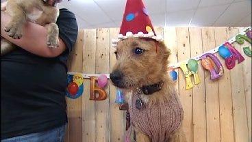 Stormy Celebrates Her First Birthday