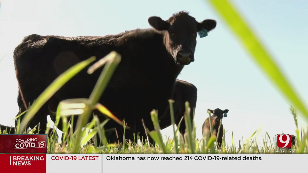 Oklahoma Ranchers See 17% Cut In Beef Prices Due To Coronavirus (COVID-19)