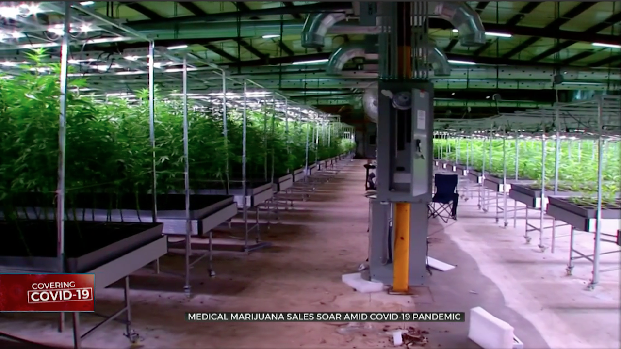 Medical Marijuana Sales Soar Amid COVID-19 Pandemic