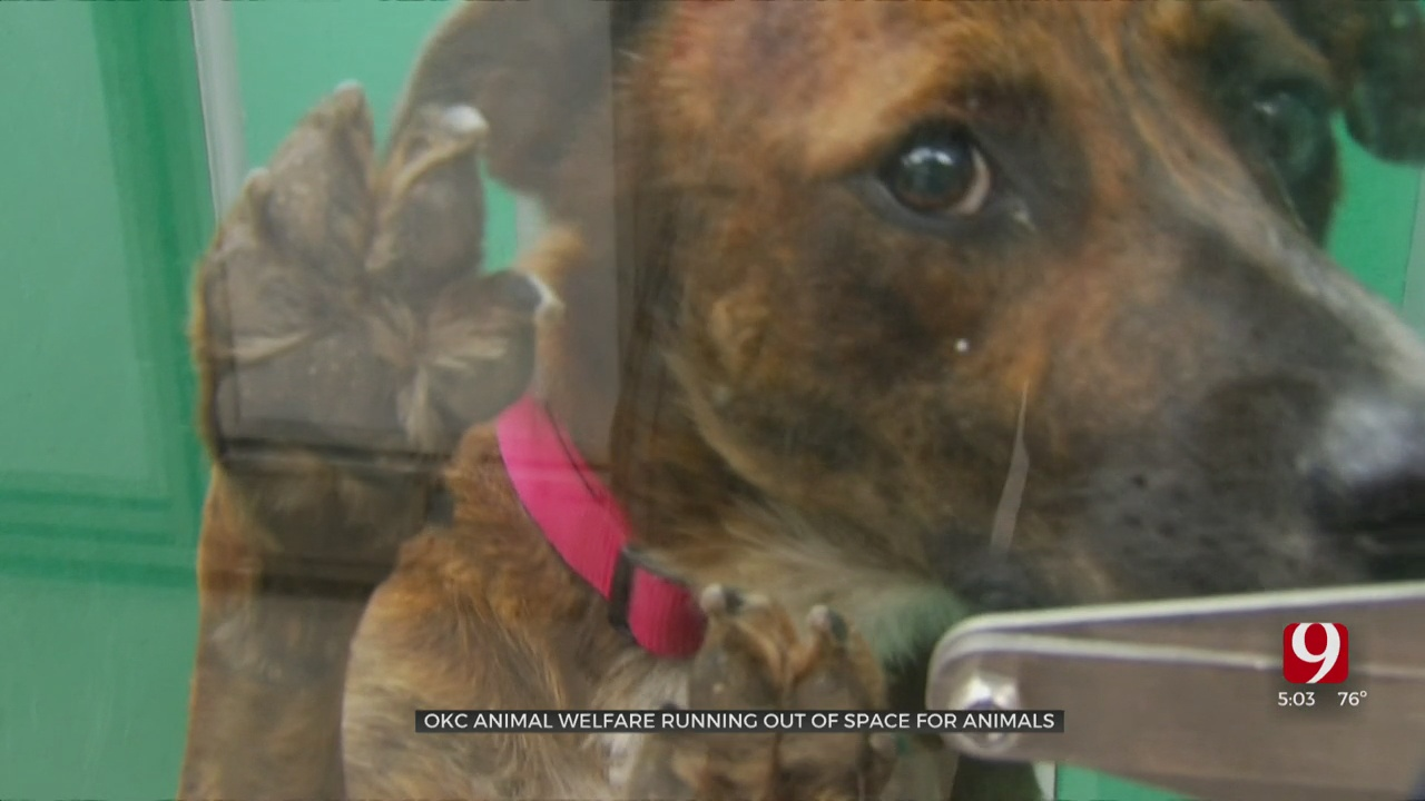 OKC Animal Welfare Asking for Community's Help To Keep Euthanasia Rates Down