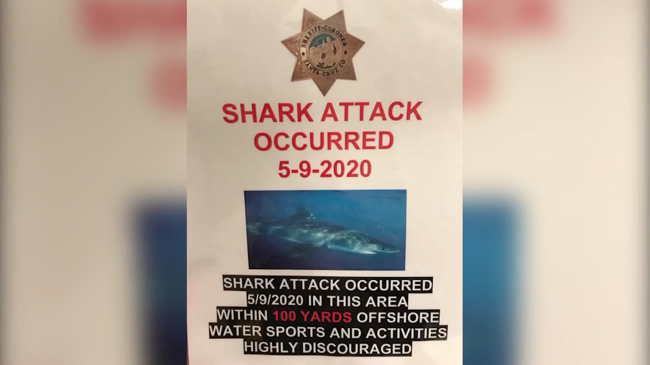 26-year-old California Surfer Mourned After Shark Attack At Santa Cruz Beach
