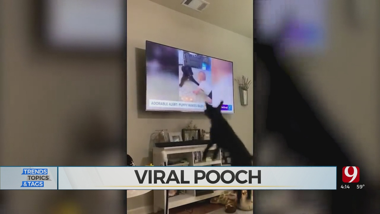 Trends, Topics & Tags: Viral Pooch