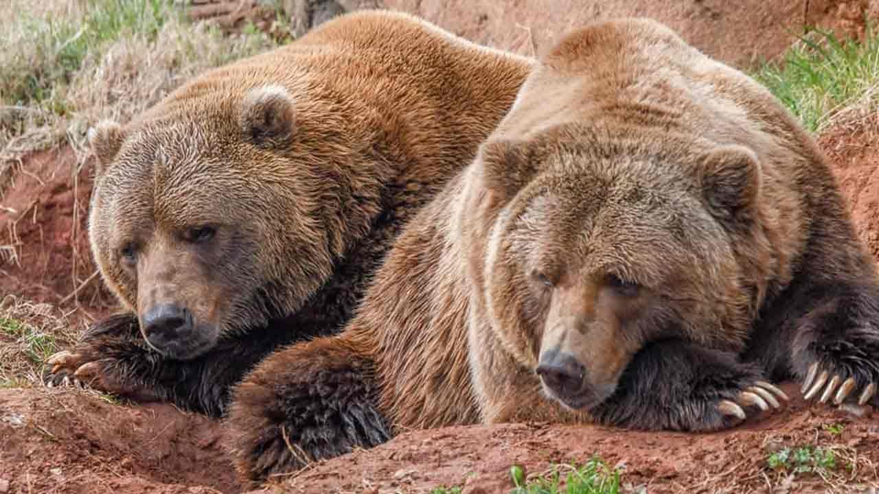 OKC Zoo Celebrating Groundhog Day With Grizzly Twist