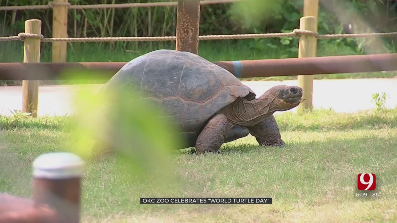 OKC Zoo Celebrates 'World Turtle Day' Saturday