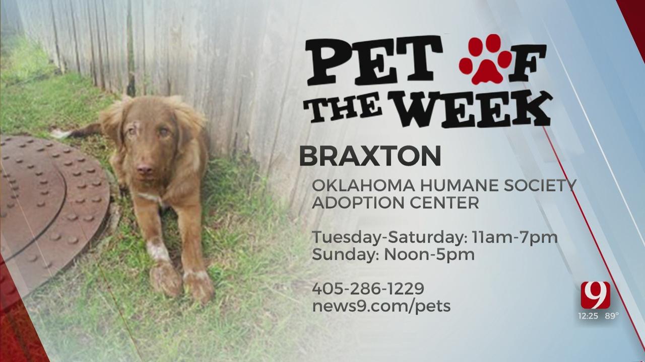 Pet of the Week: Braxton