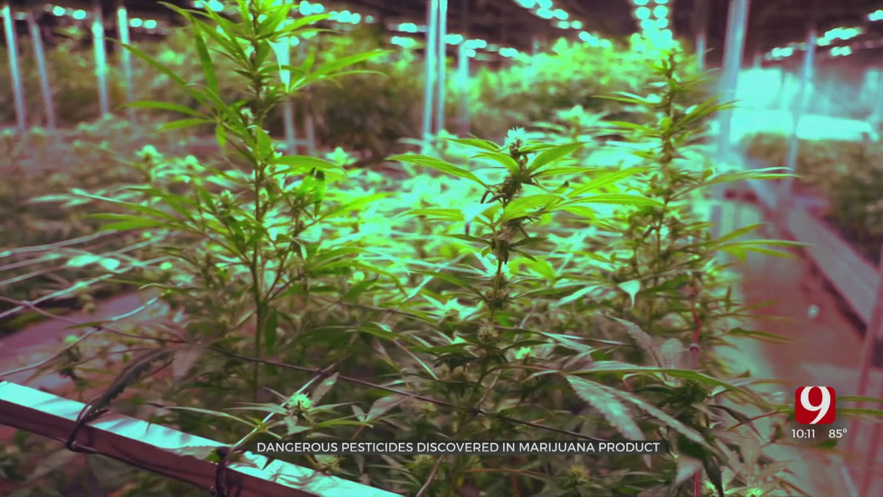 News 9 Investigates Banned Pesticides Found In Medical Marijuana Sold To Customers
