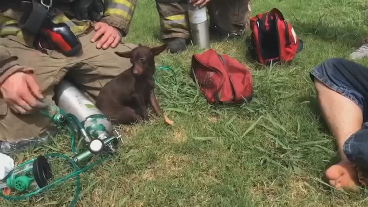 OKC Firefighters Rescue 2 Dogs From Burning Home
