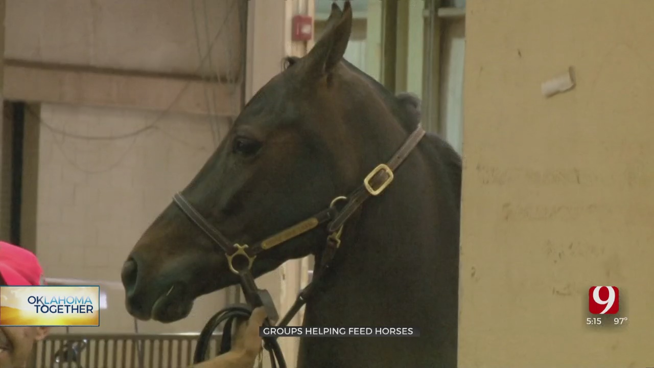 Local Groups Help Support Horse Owners