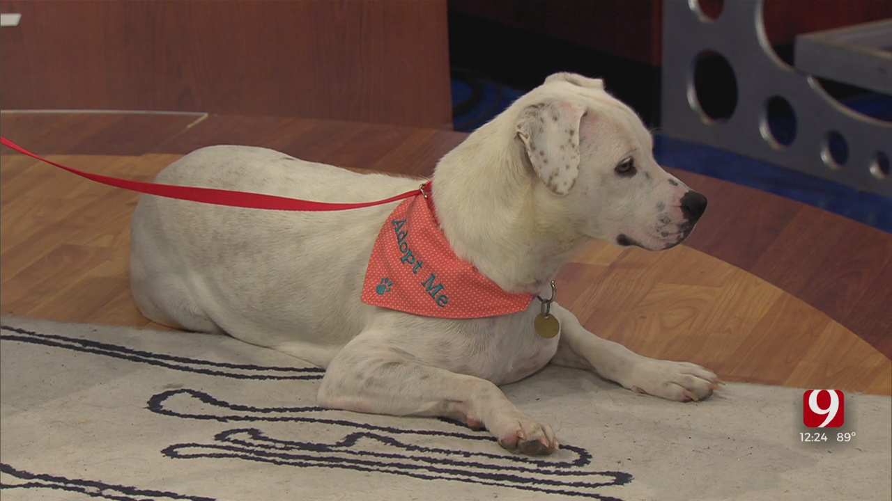 Pet Of The Week: Lennox