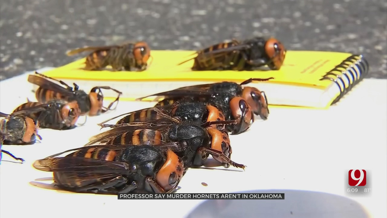 Oklahomans Concerned About Possible Murder Hornets In The State