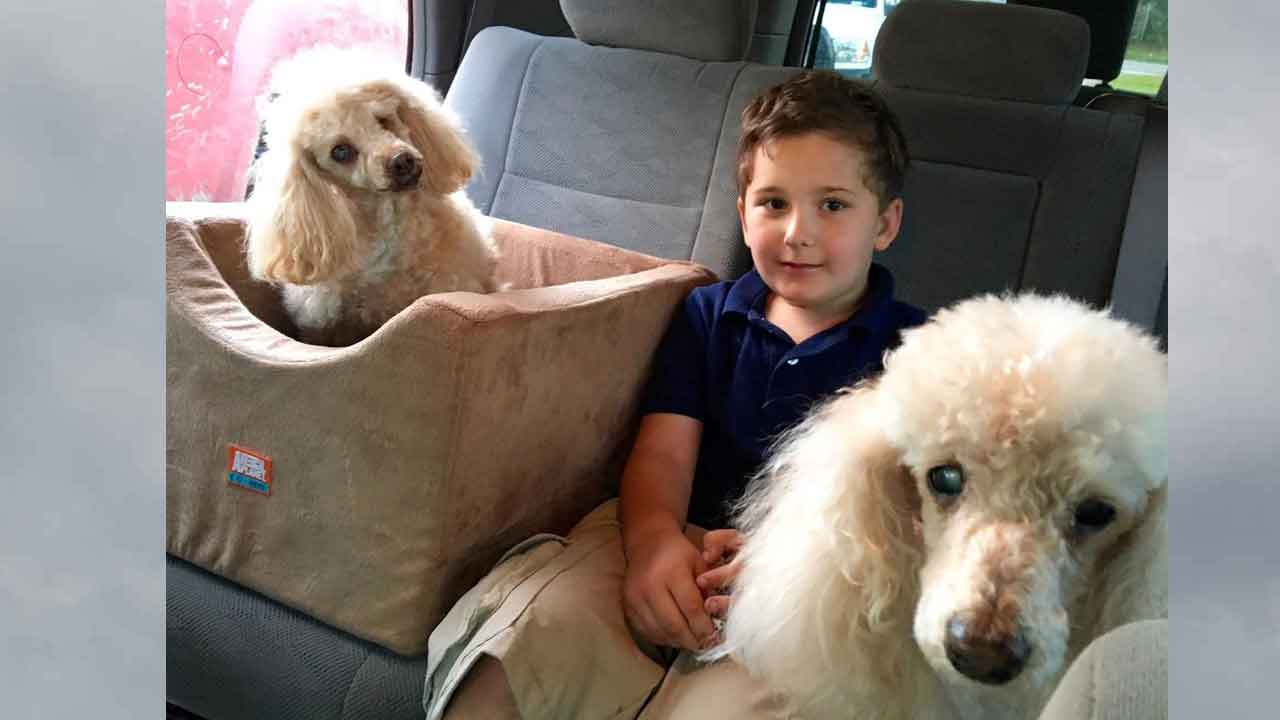 Adopted Boy Is On Mission To Save Old Dogs Who Need Homes