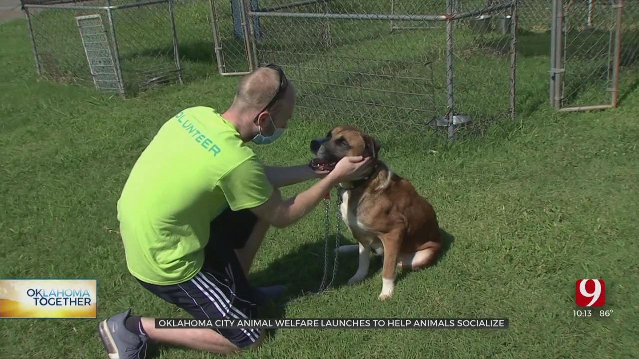 Oklahoma City Animal Welfare Launches Program To Help Animals Socialize
