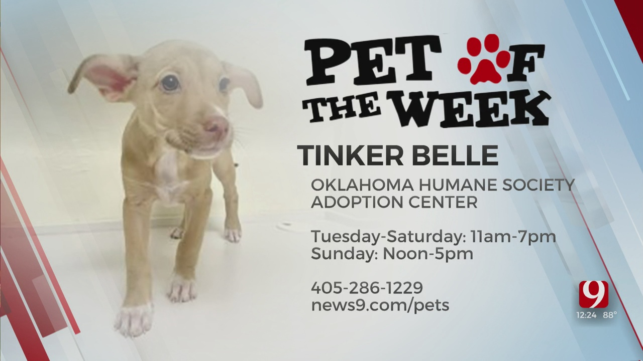 Pet Of The Week: Tinker Belle