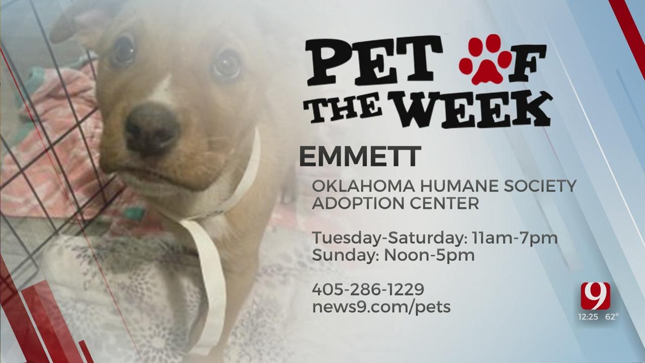Pet Of The Week: Emmett