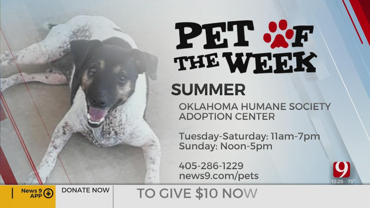 Pet Of The Week: Summer