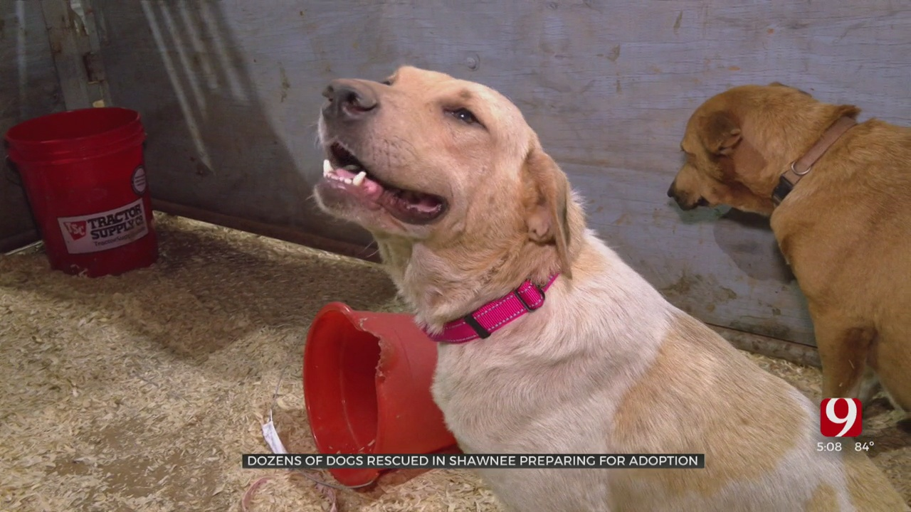 Dozens Of Dogs Rescued In Pottawatomie County Preparing For Adoption