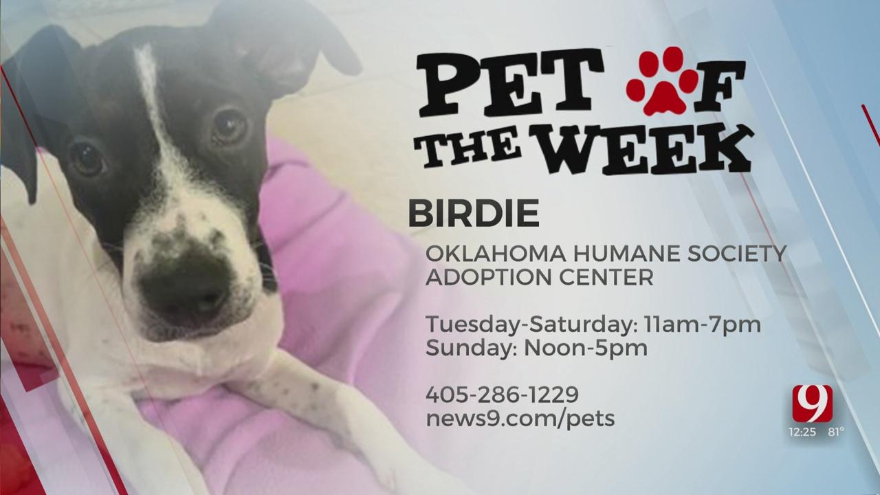 Pet Of The Week: Birdie