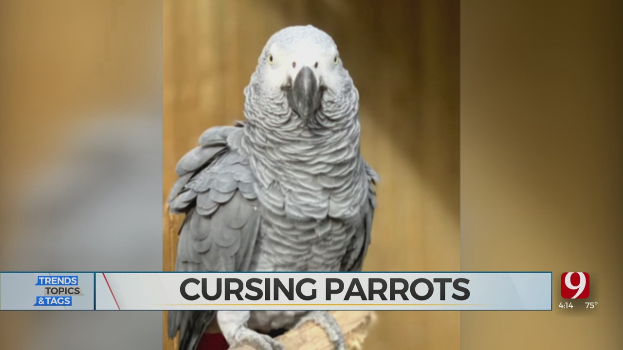 Trends, Topics & Tags: Swearing Parrots