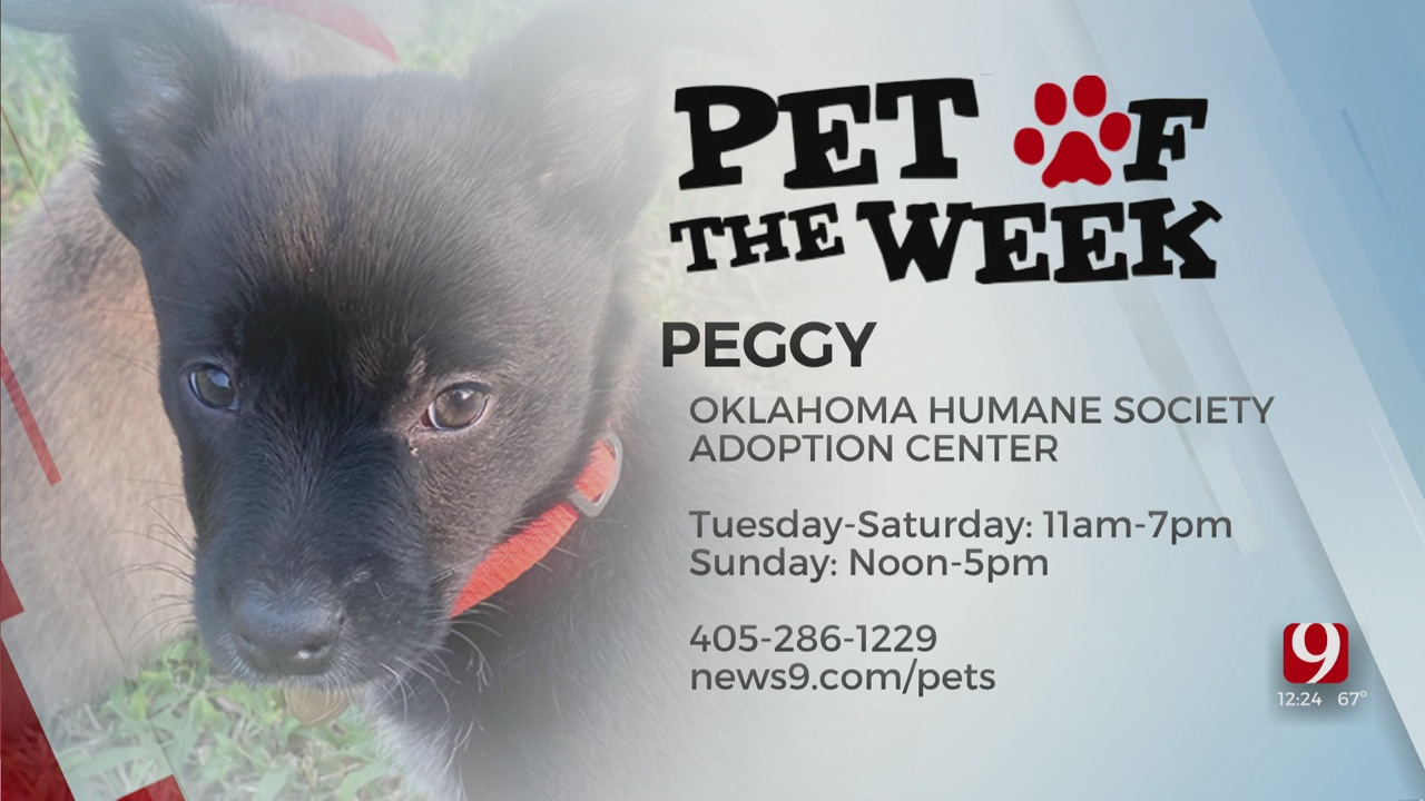 Pet Of The Week: Peggy