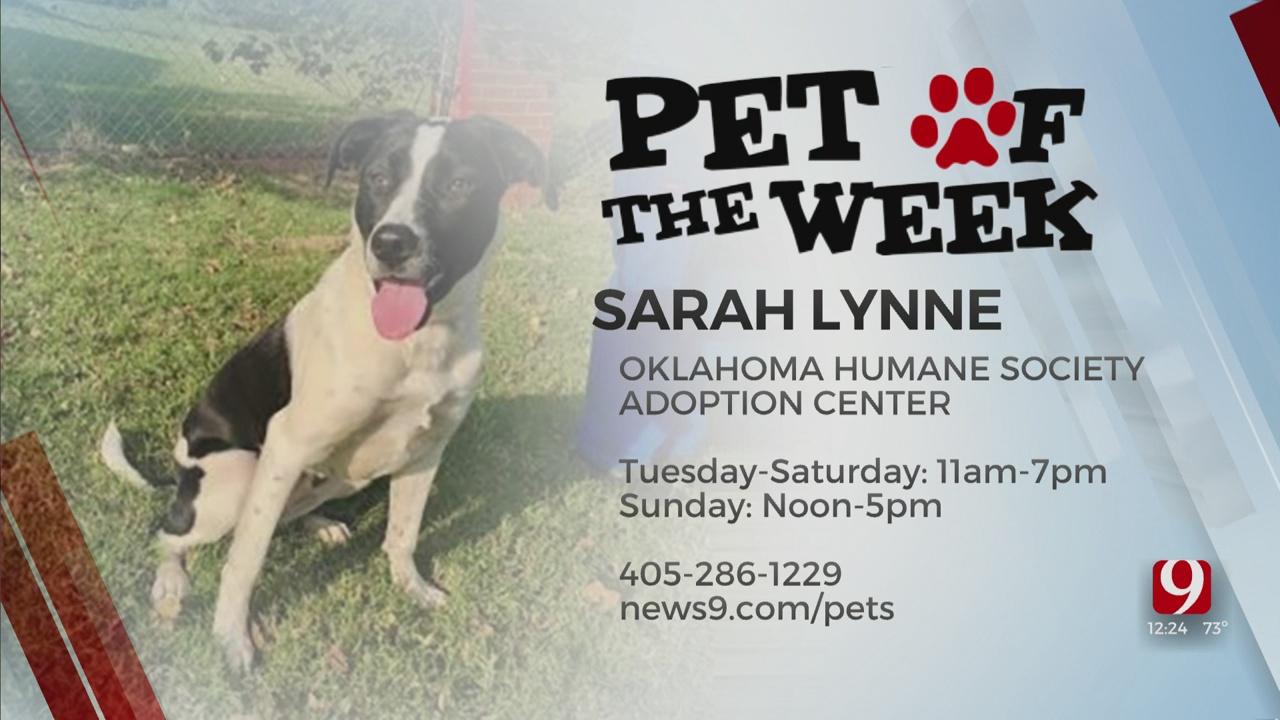 Pet Of The Week: Sarah Lynne