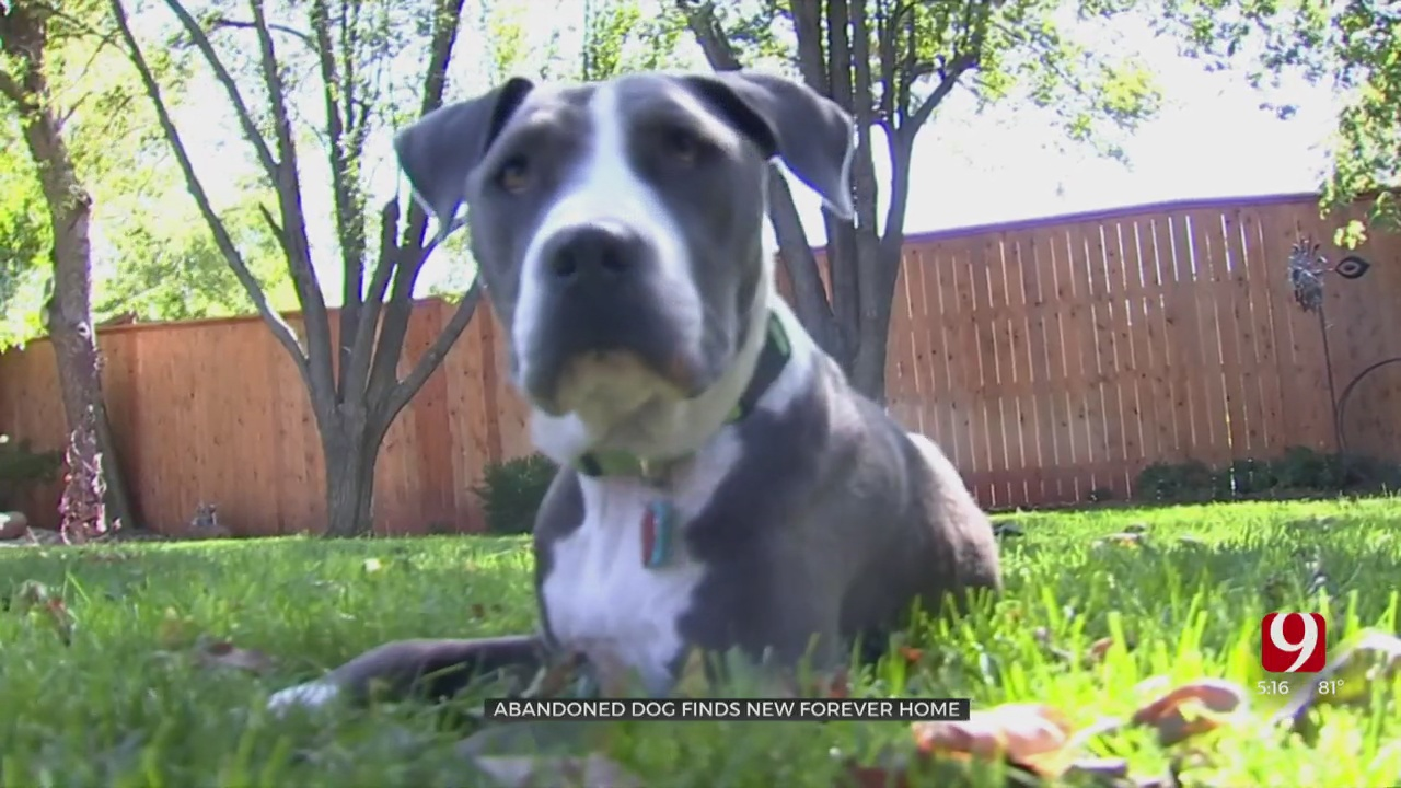 Abandoned Dog Finds New Forever Home After Getting Help From OKC Animal Welfare Volunteer