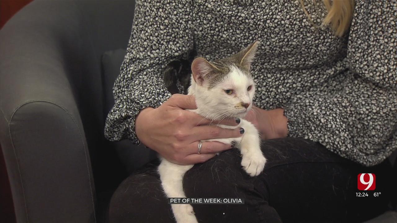 Pet of the Week: Olivia