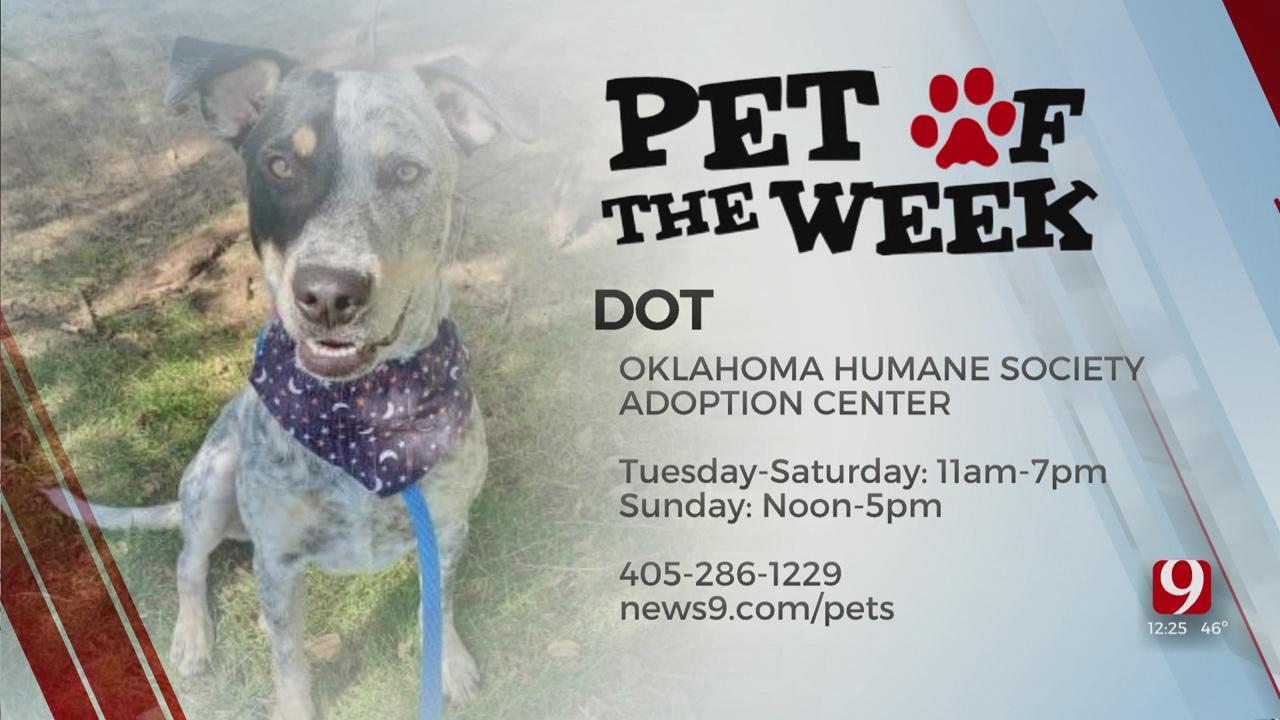 Pet Of The Week: Dot