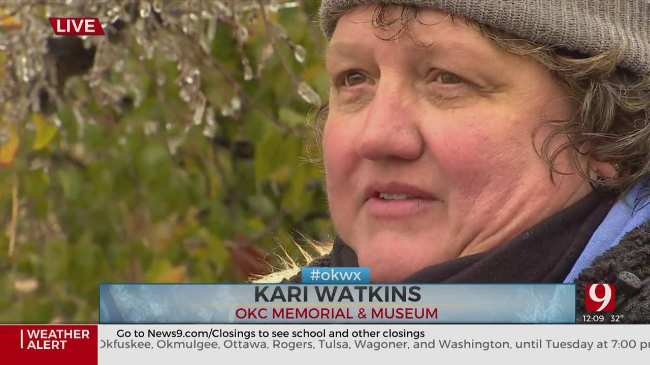 Ice Storm Causes Damage To 'Irreplaceable' Survivor Tree