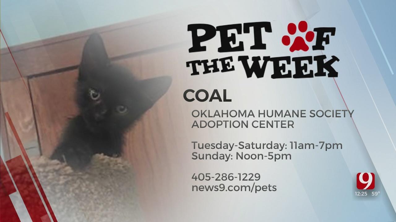 Pet Of The Week: Coal