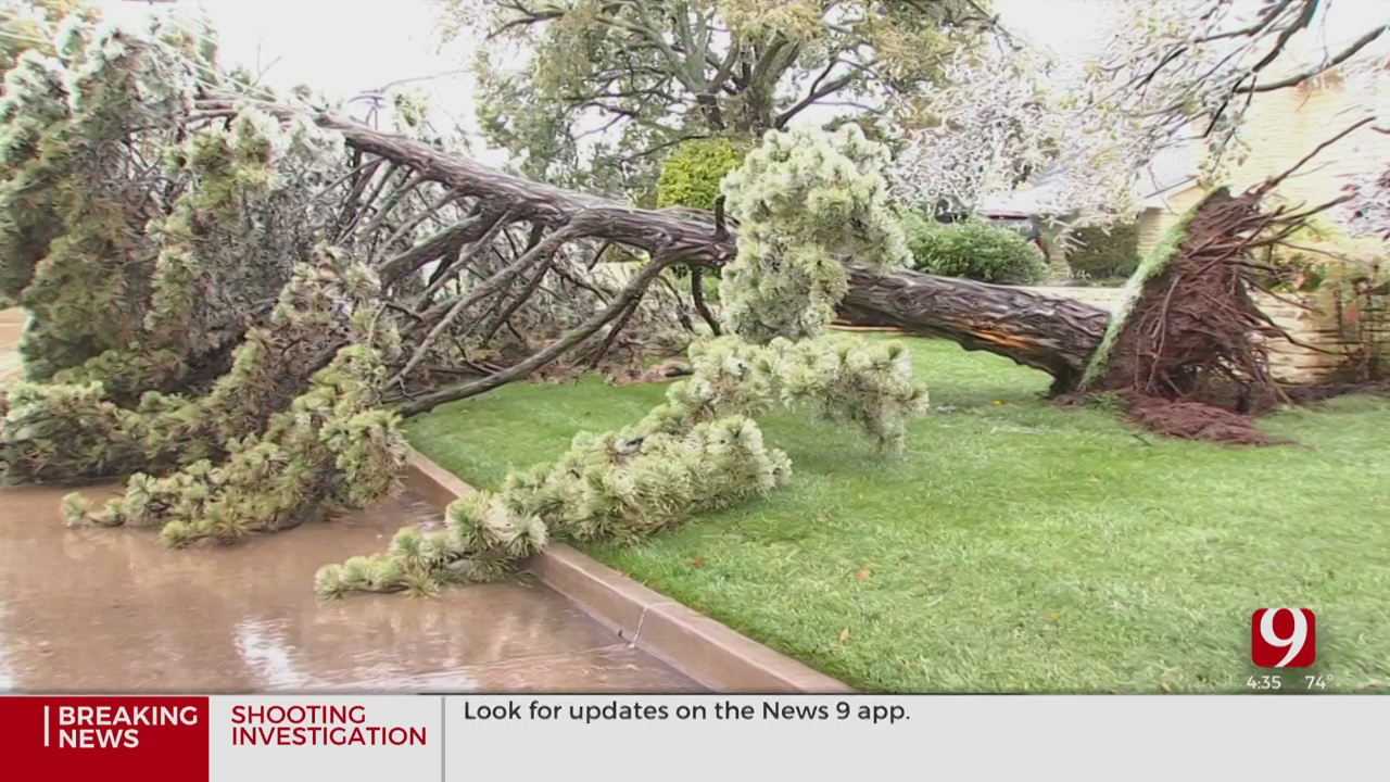 Tree Trimmers Warn Of Scammers As Ice Storm Cleanup Continues