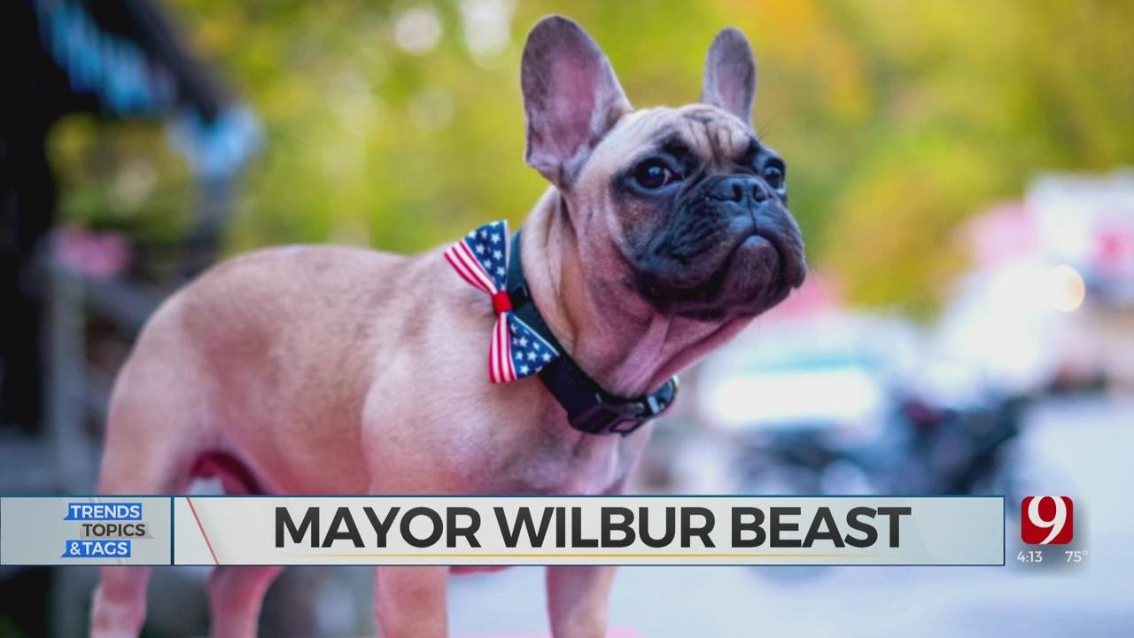 Trends, Topics & Tags: Bulldog Mayor