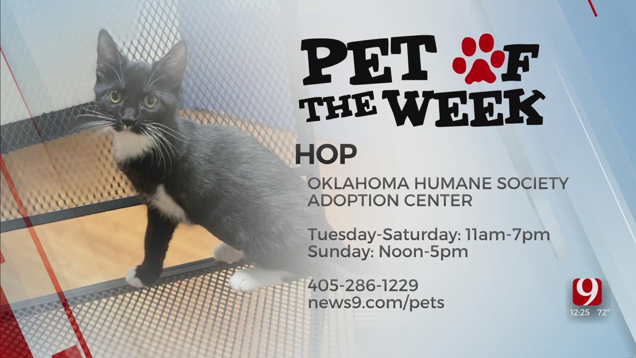 Pet Of The Week: Hop