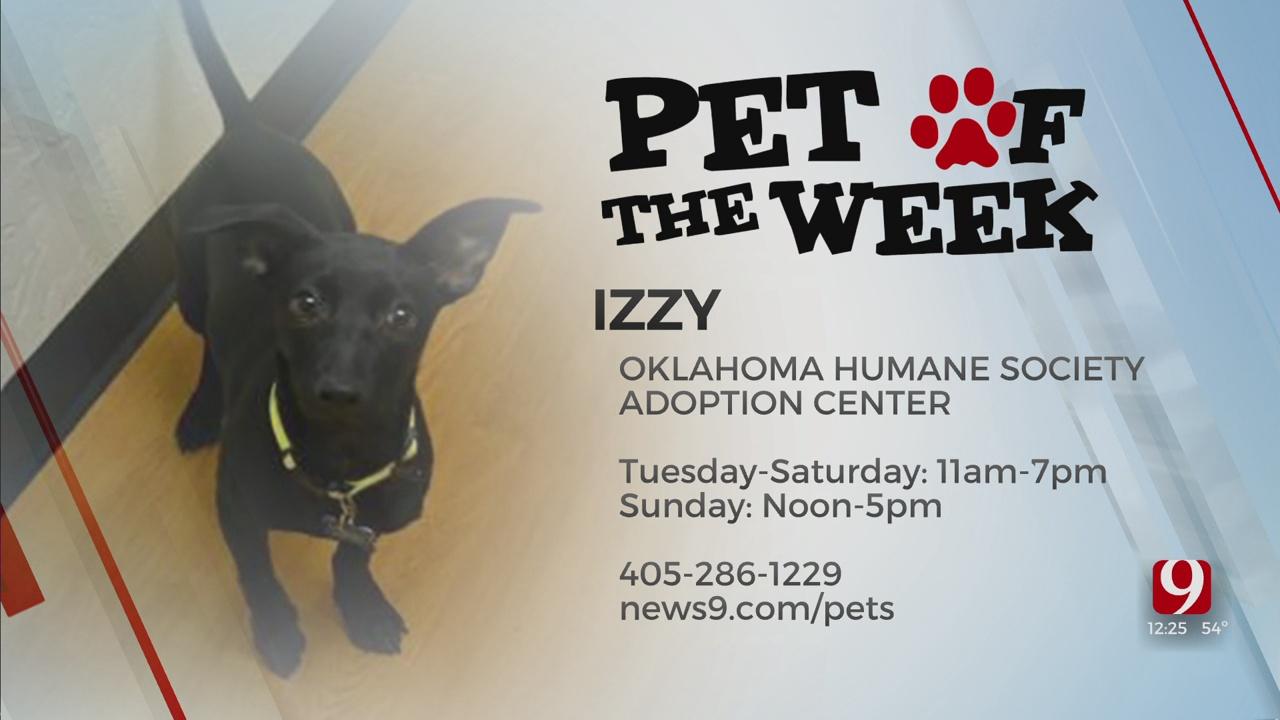 Pet Of The Week: Izzy