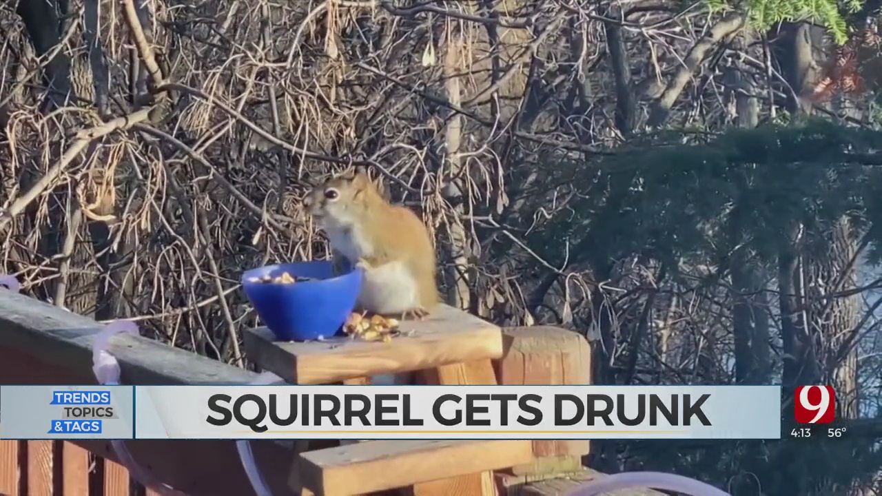 Trends, Topics & Tags: Drunk Squirrel