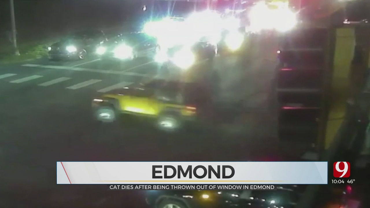 Cat Dies After Being Thrown From Car Window At Edmond Intersection