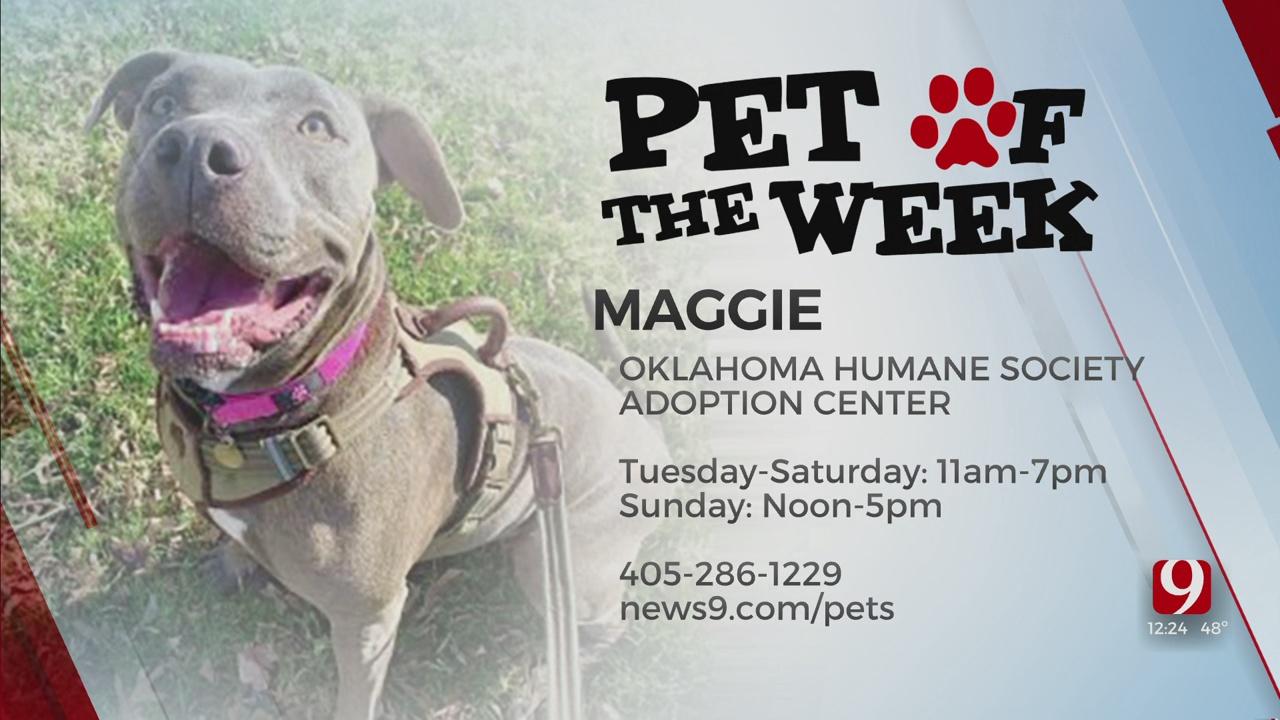 Pet Of The Week: Maggie