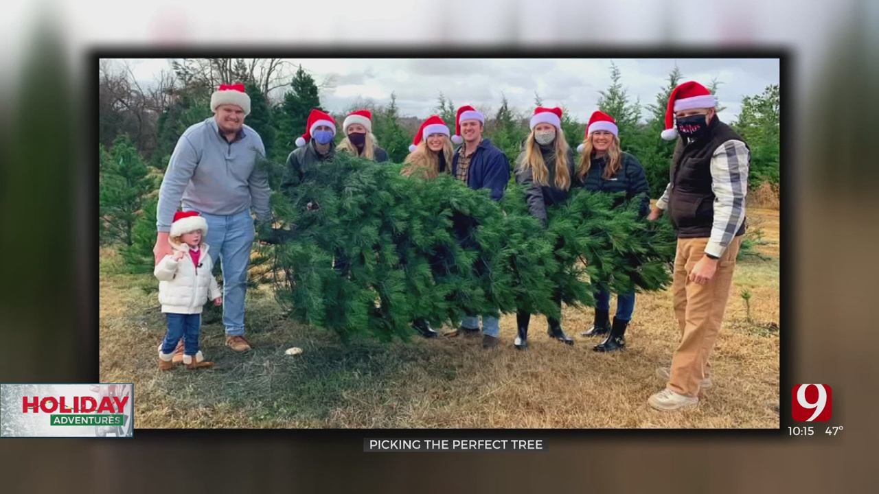 Holiday Adventures: Picking The Perfect Tree