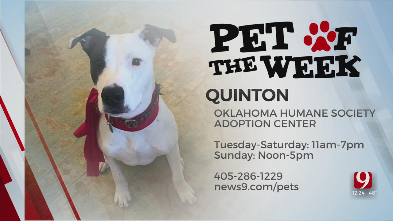 Pet Of The Week: Quinton