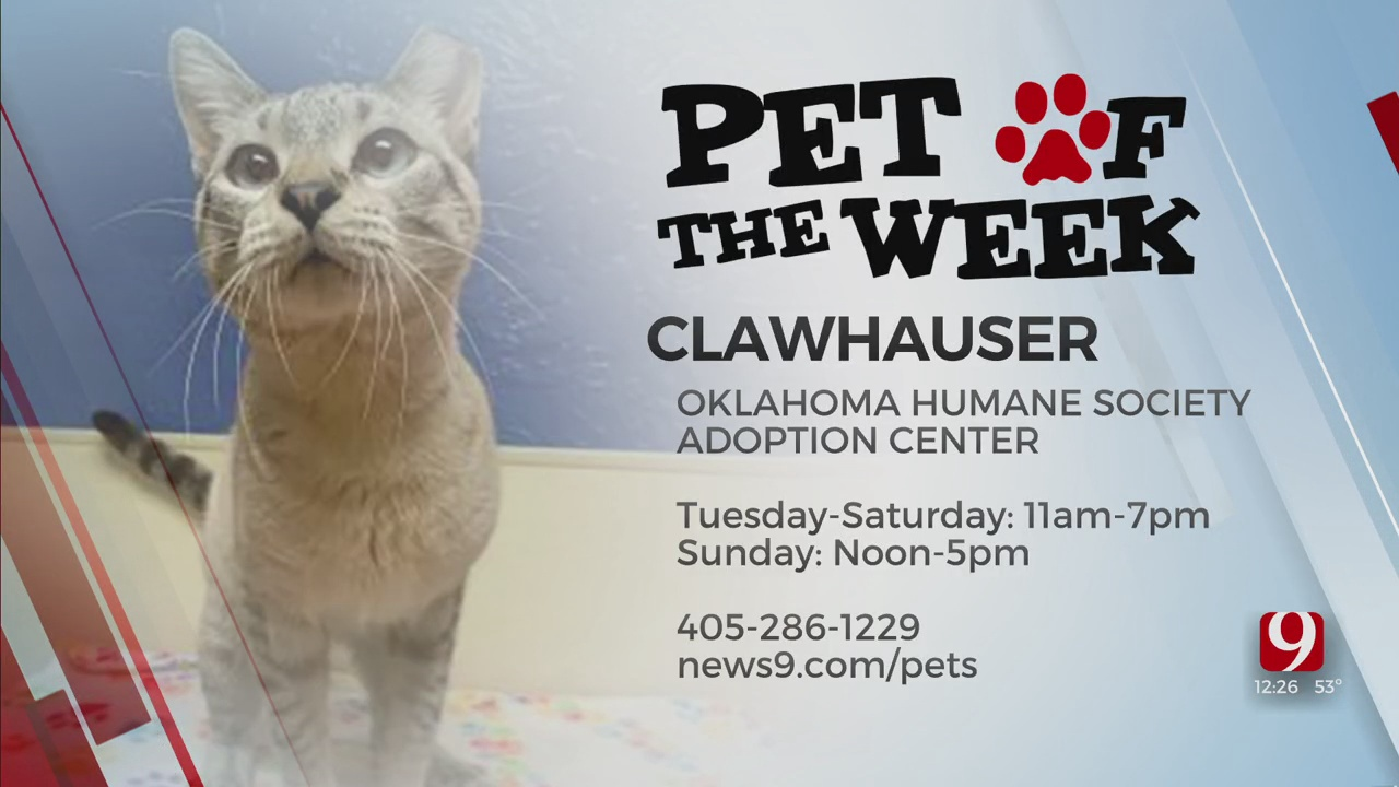 Pet Of The Week: Clawhauser