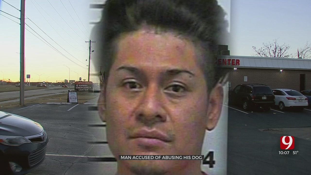 Local Man Arrested, Accused Of Abusing His Chihuahua