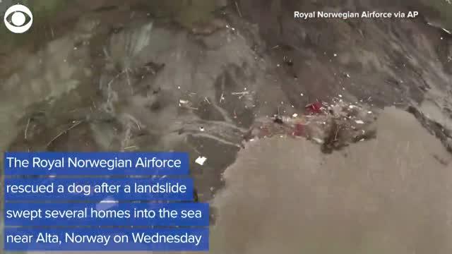 WATCH: Dog Rescued After Landslide Sweeps Home Into Sea