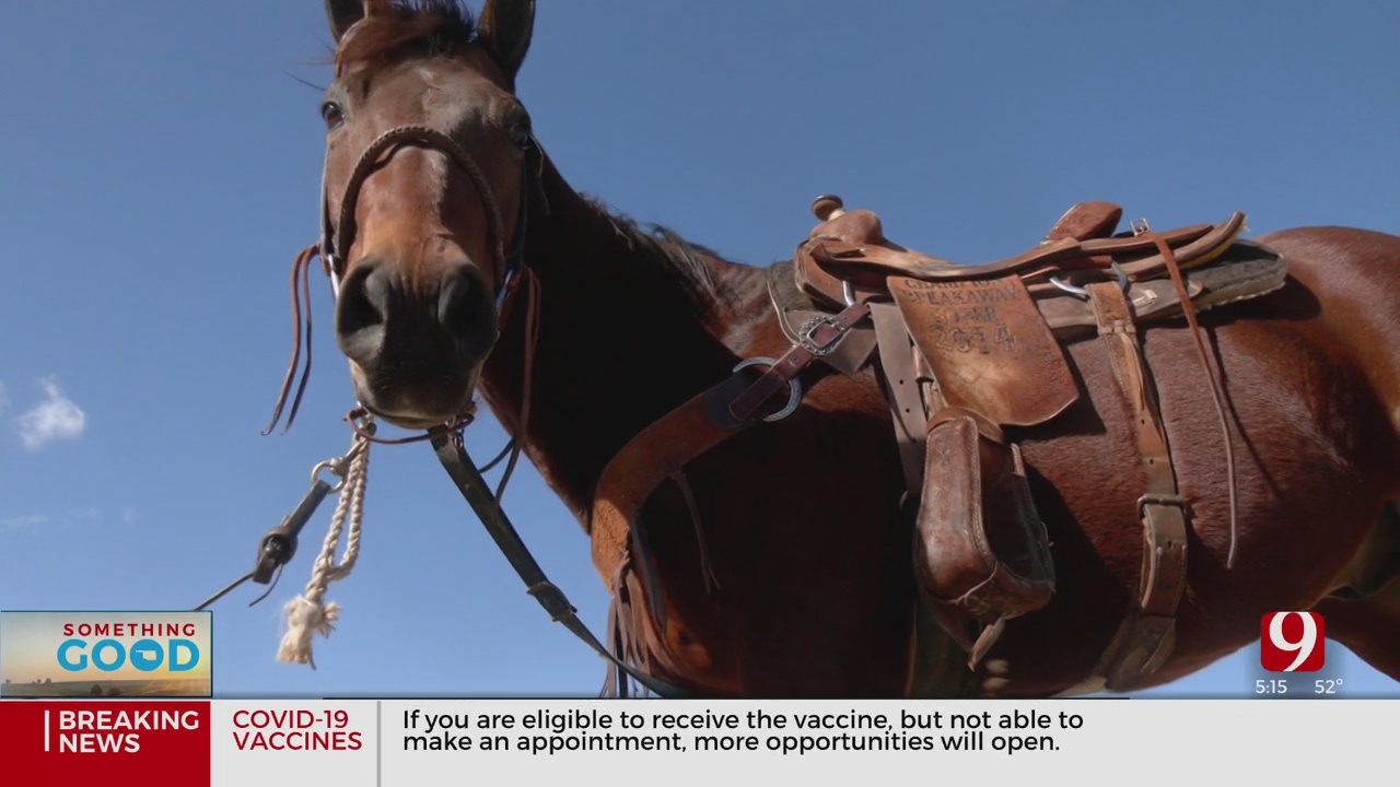 Rescued Horse Competes In The International Finals Rodeo
