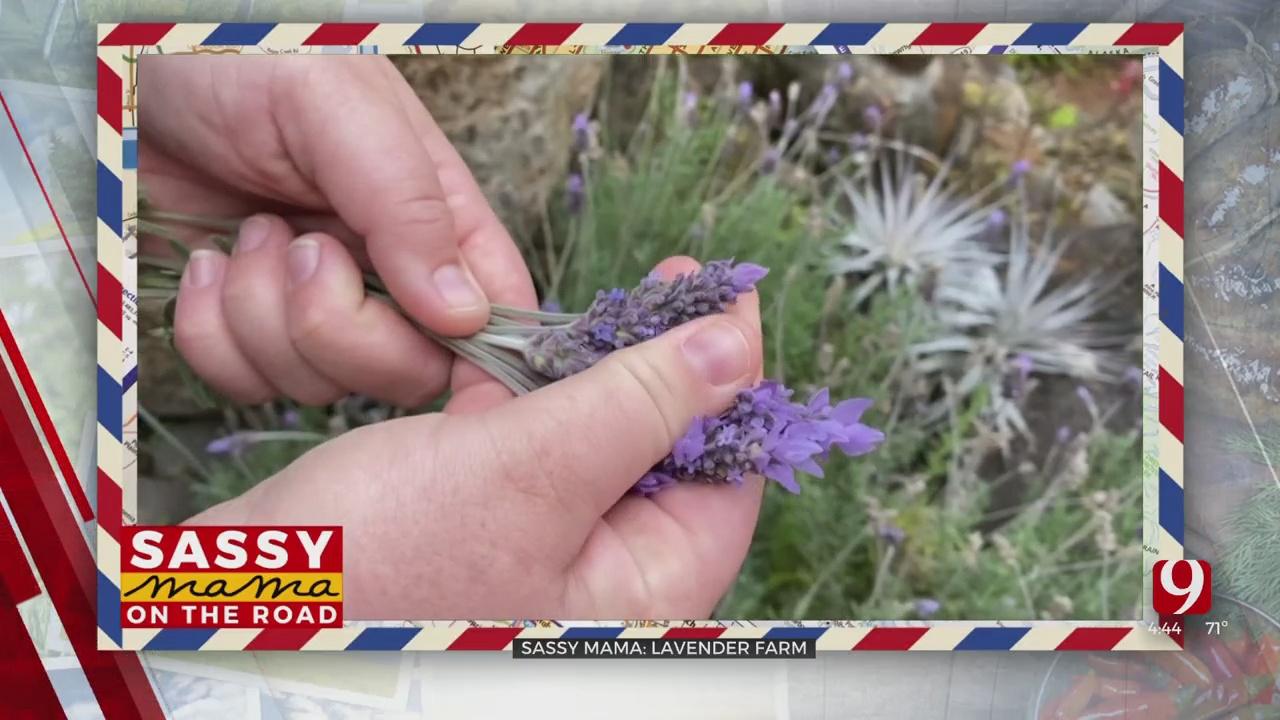 Sassy Mama On The Road: Lavender Farm